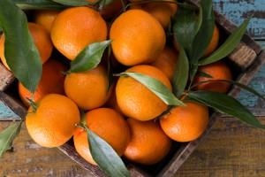 PO MANDARINE (obiranje Mandarin na Neretvi) - 3 dni