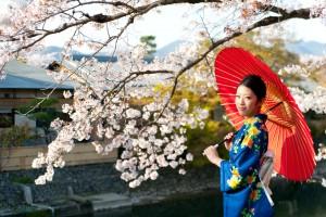 JAPONSKA V BARVI ČEŠENJ
