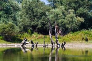 SLAVONIJA IN KOPAČKI RIT Hrvaška