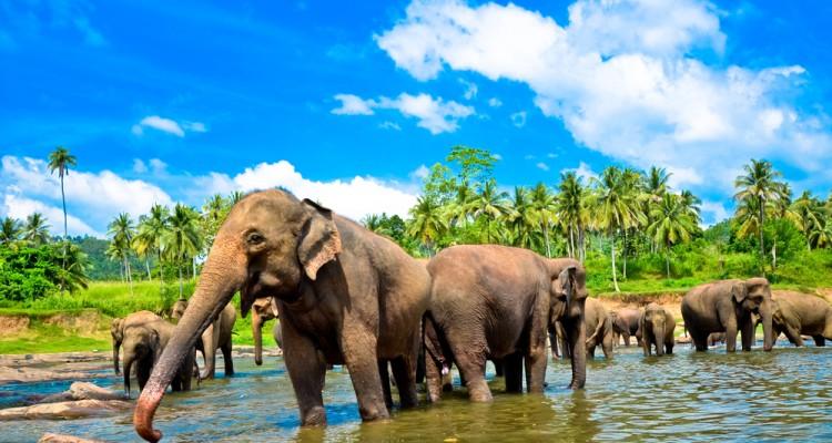 ŠRILANKA IN MALDIVI Azija
