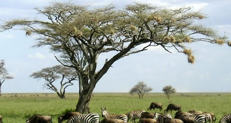 TANZANIJA IN ZANZIBAR Afrika